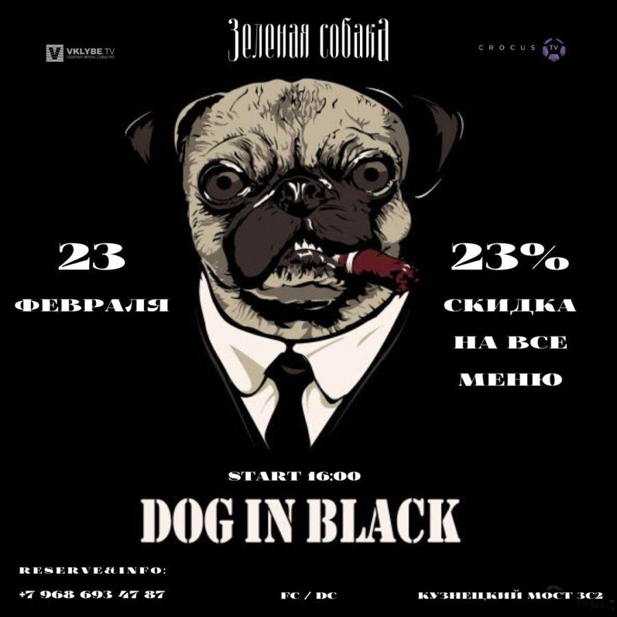 Вторник 23.02 / Dog in Black